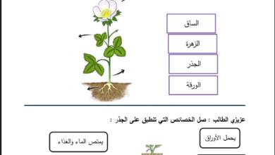 Photo of ( العلوم ) أوراق عمل راااائعة جدا لجميع دروس مادة العلوم  للصف الثالث الفصل الأول .