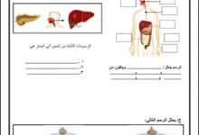 Photo of ( علوم ) مراجعة هامة جدا وتدريبات شاملة في مادة العلوم للصف الرابع – الفصل الأول