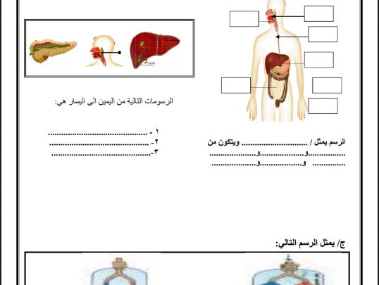 صورة ( علوم ) مراجعة هامة جدا وتدريبات شاملة في مادة العلوم للصف الرابع – الفصل الأول