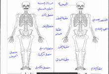 Photo of ( علوم ) إجابة المادة التدريبية للوكالة (لمادة العلوم) للصف الخامس ف2