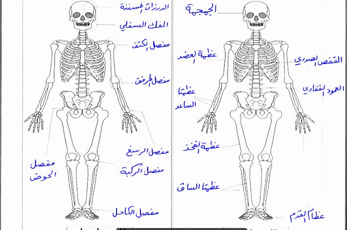 صورة ( علوم ) إجابة المادة التدريبية للوكالة (لمادة العلوم) للصف الخامس ف2
