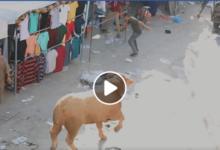 Photo of مشاهد مرعبة لحظة هروب أحد العجول في خانيونس – قطاع غزة